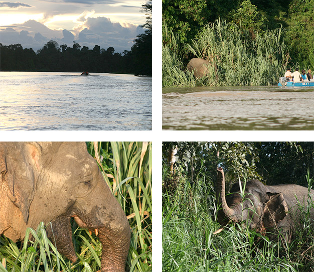 Elephants on the river bank