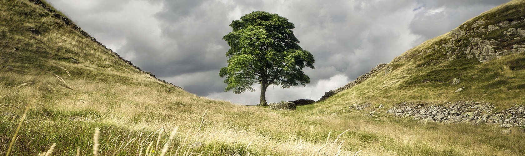 A tree between two hills