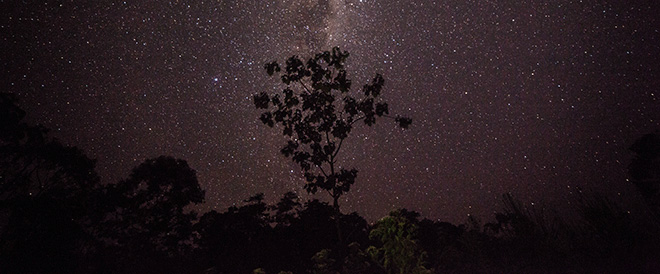 Starry Night in the Jungle